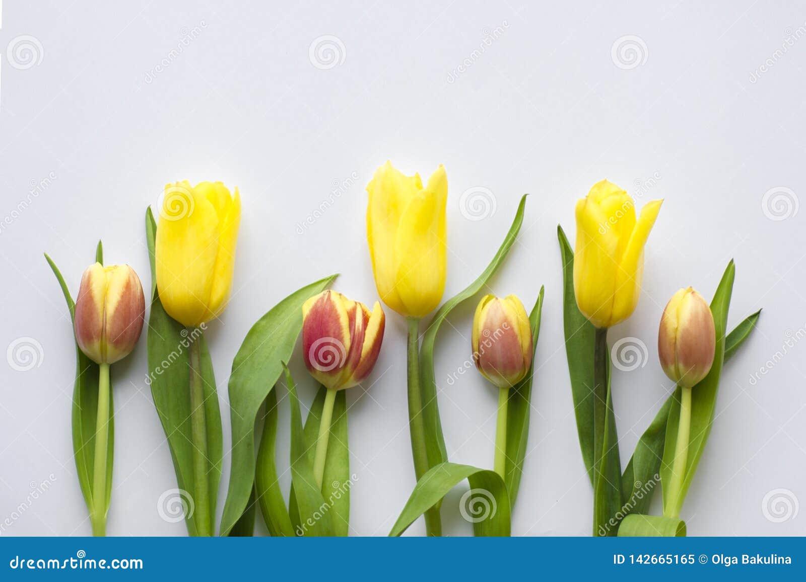 Schöne Jahreszeit der Blume im Frühjahr