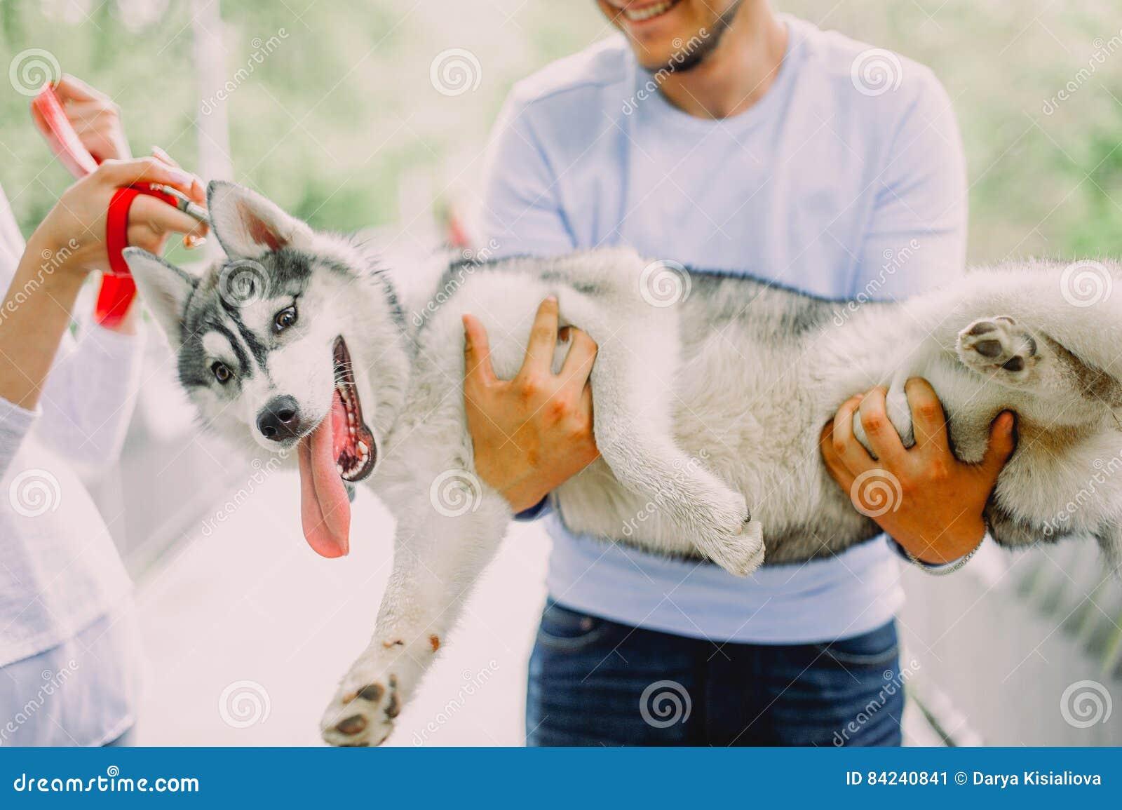 Schöne junge Paare, die mit einem Hundeschlittenhund in einem Park spielen Summe