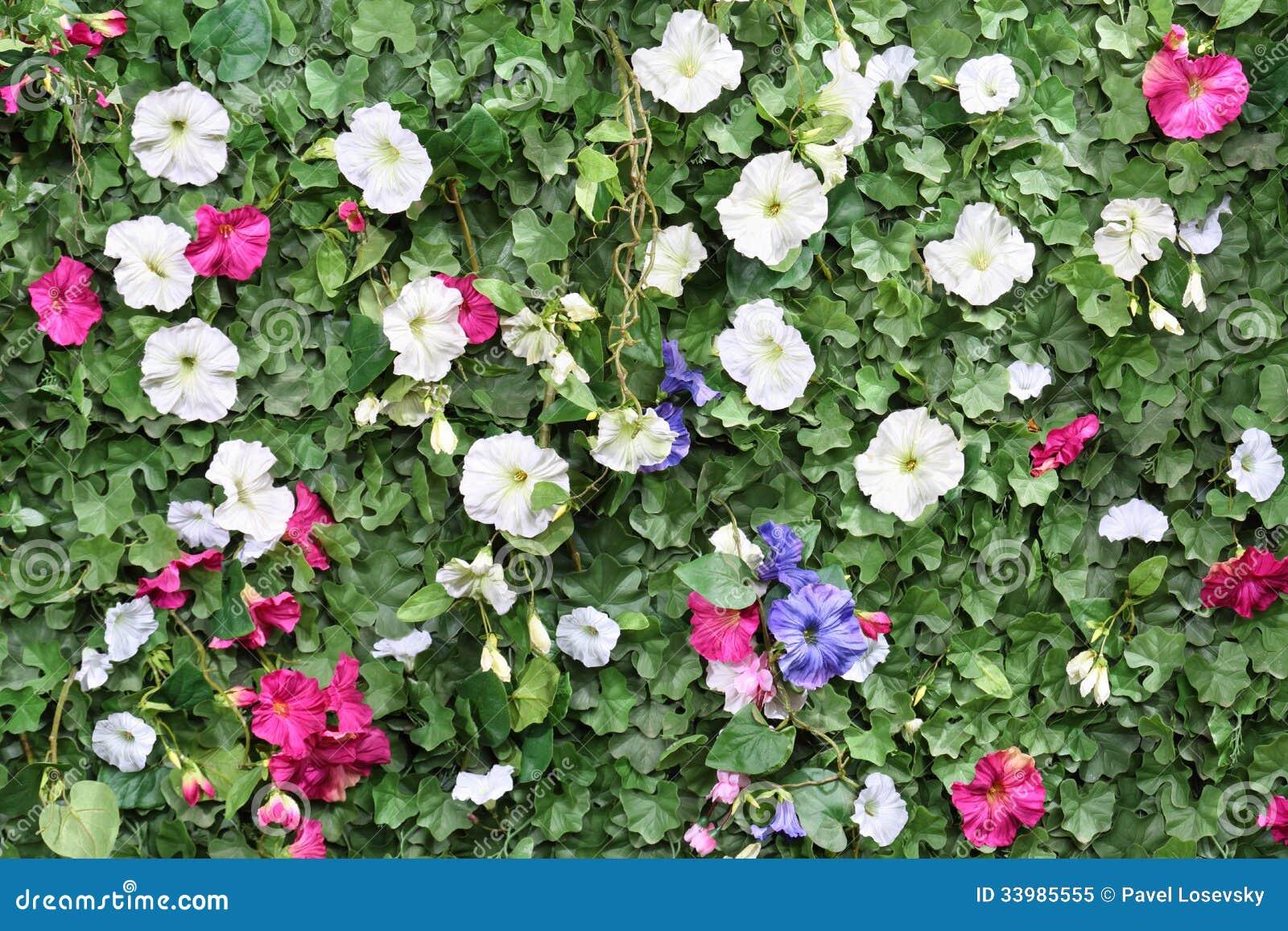 Schöne Künstliche Grüne Hecke Mit Blumen Lizenzfreies Stockfoto