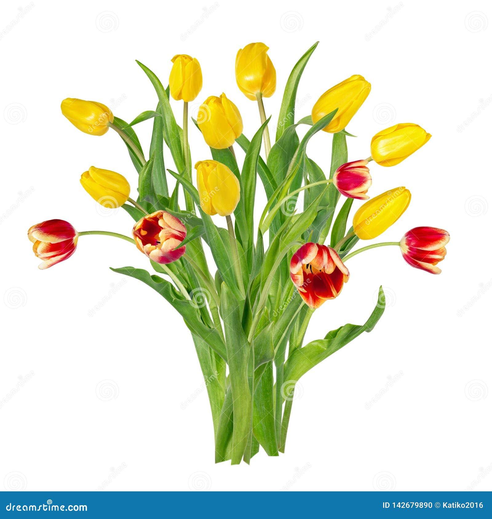 Sch?ne klare gelbe und rote Tulpen auf langen St?mmen mit gr?nen Bl?ttern in einem B?ndel Blumenstrau? der Fr?hlingsblumen