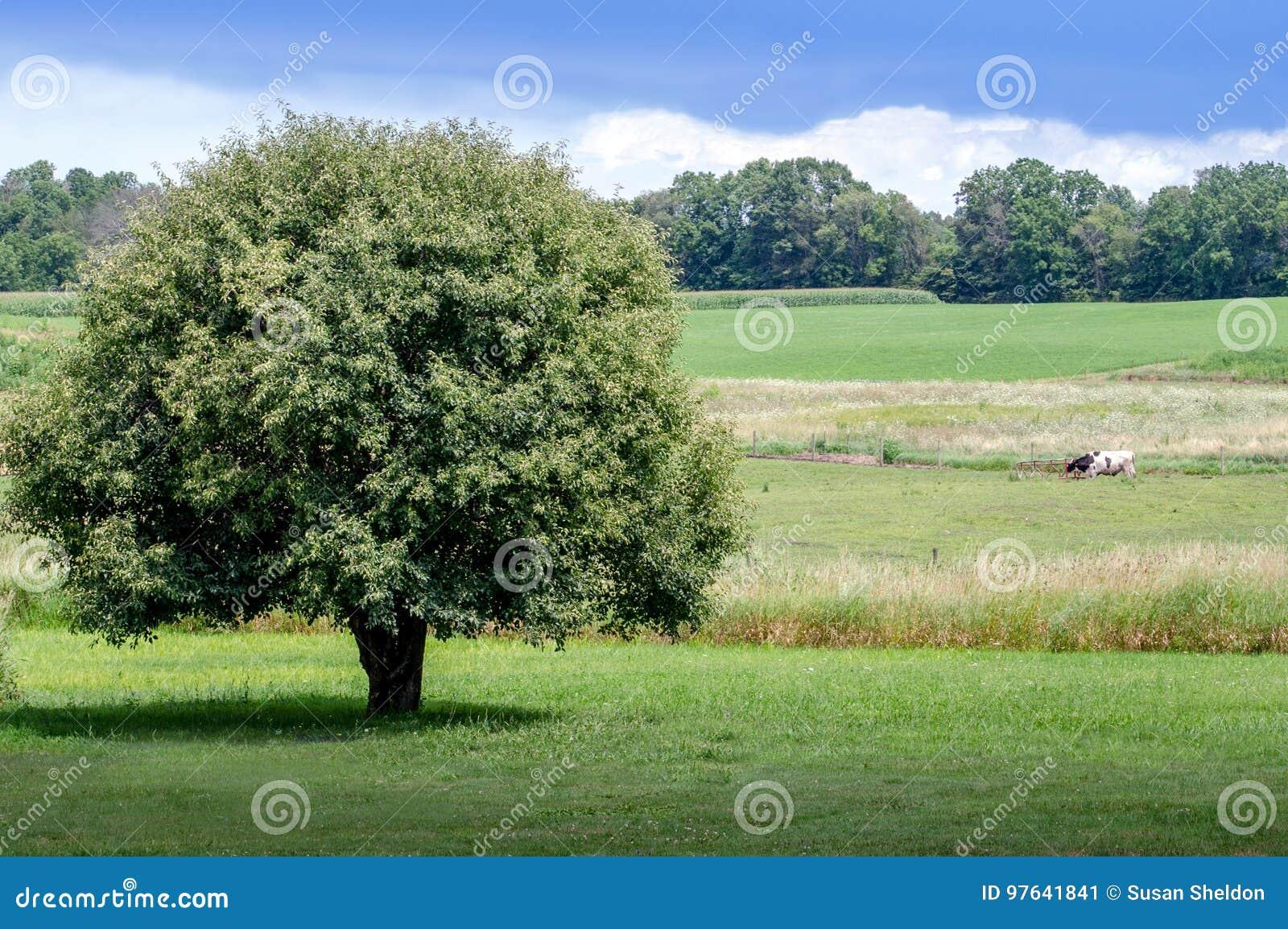 Schöne ländliche Landschaft in Michigan
