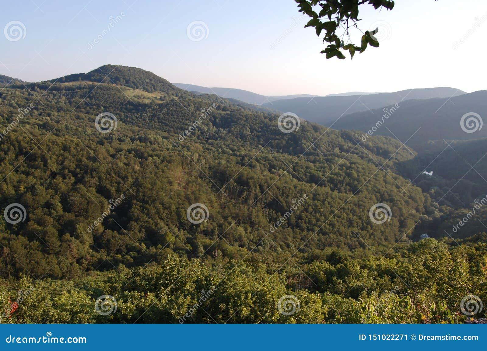 Schöne Landschaft, Baum, Wald und Berge bei Grza, Serbien