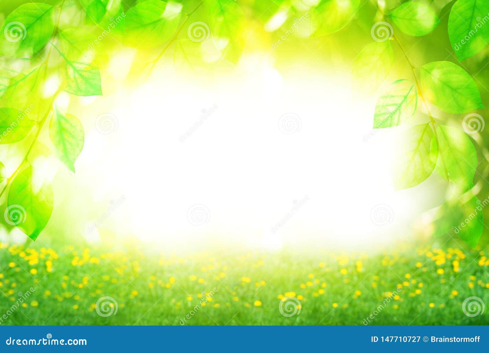 Schöne Landschaft des Sommers sonniger Tages, grüne Blattniederlassungen und Blumenfeld auf hellem unscharfem bokeh Hintergrund n