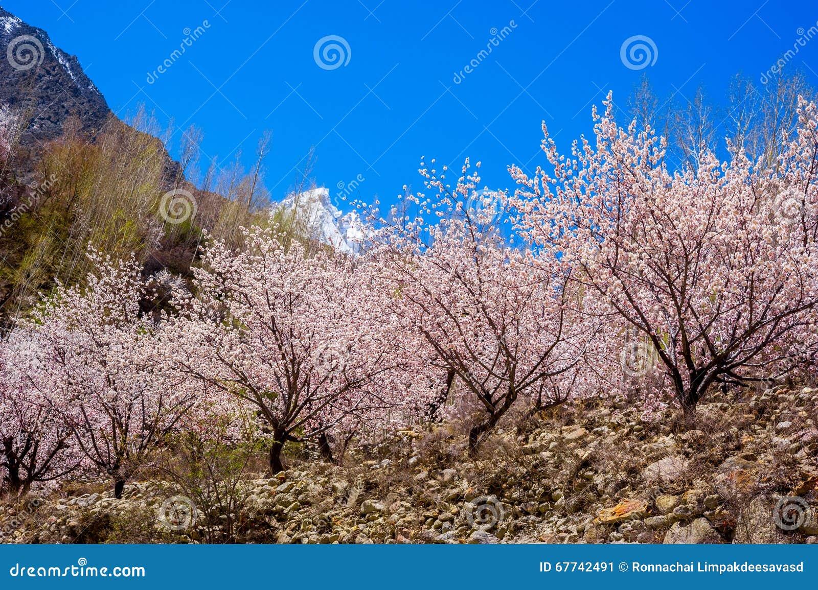 Schöne Landschaft von Hunza-Tal in der Herbstsaison