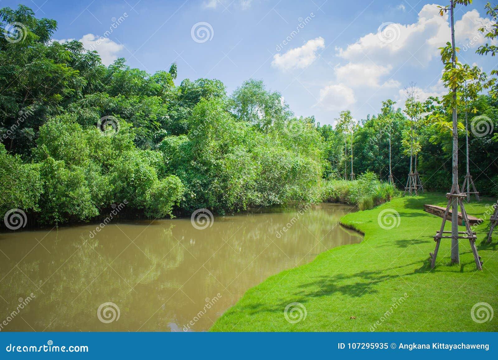 Schöne Landschaft Von Kleinem Teich Garten Im Im Freien Umgeben Mit ...