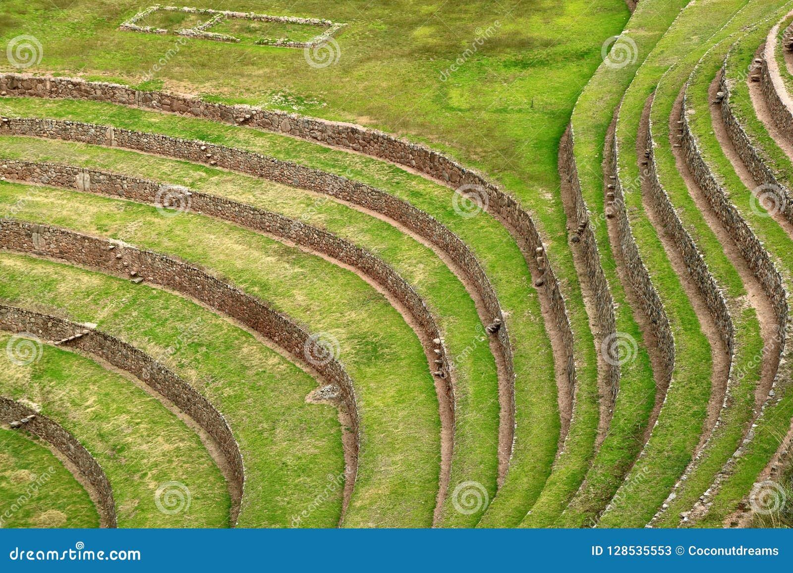 Schöne Linien von landwirtschaftlichen Terrasseninkaruinen von Moray Archaeological-Standort, heiliges Tal der Inkas, Cusco-Regio