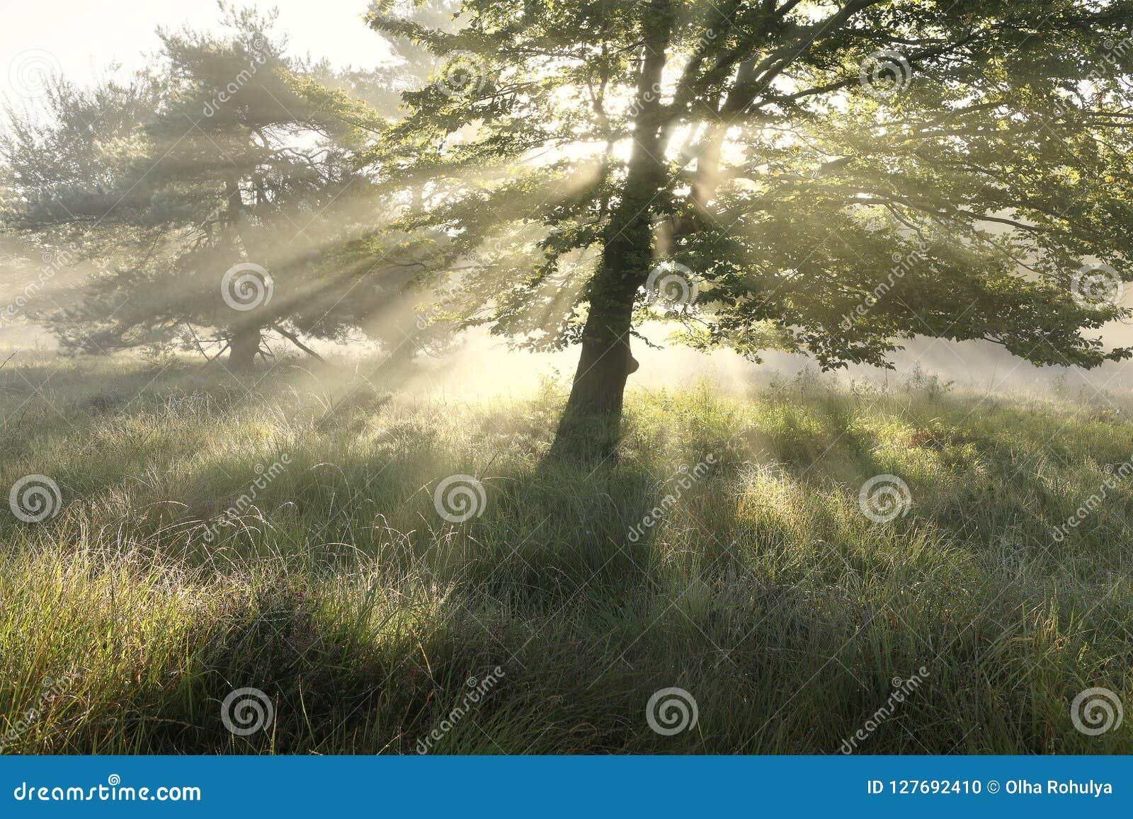 Schöne Morgensonnenstrahlen durch Baumblätter