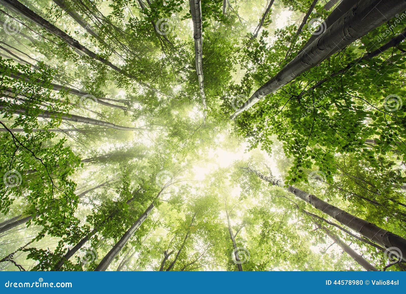 Schöne Natur am Morgen im nebelhaften Frühlingswald mit Sonne