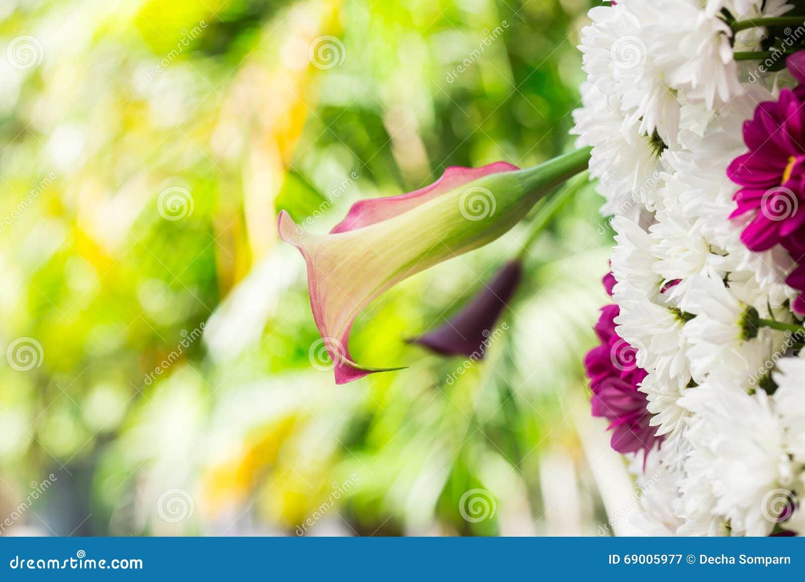 Schöne Orchidee in den Gärten