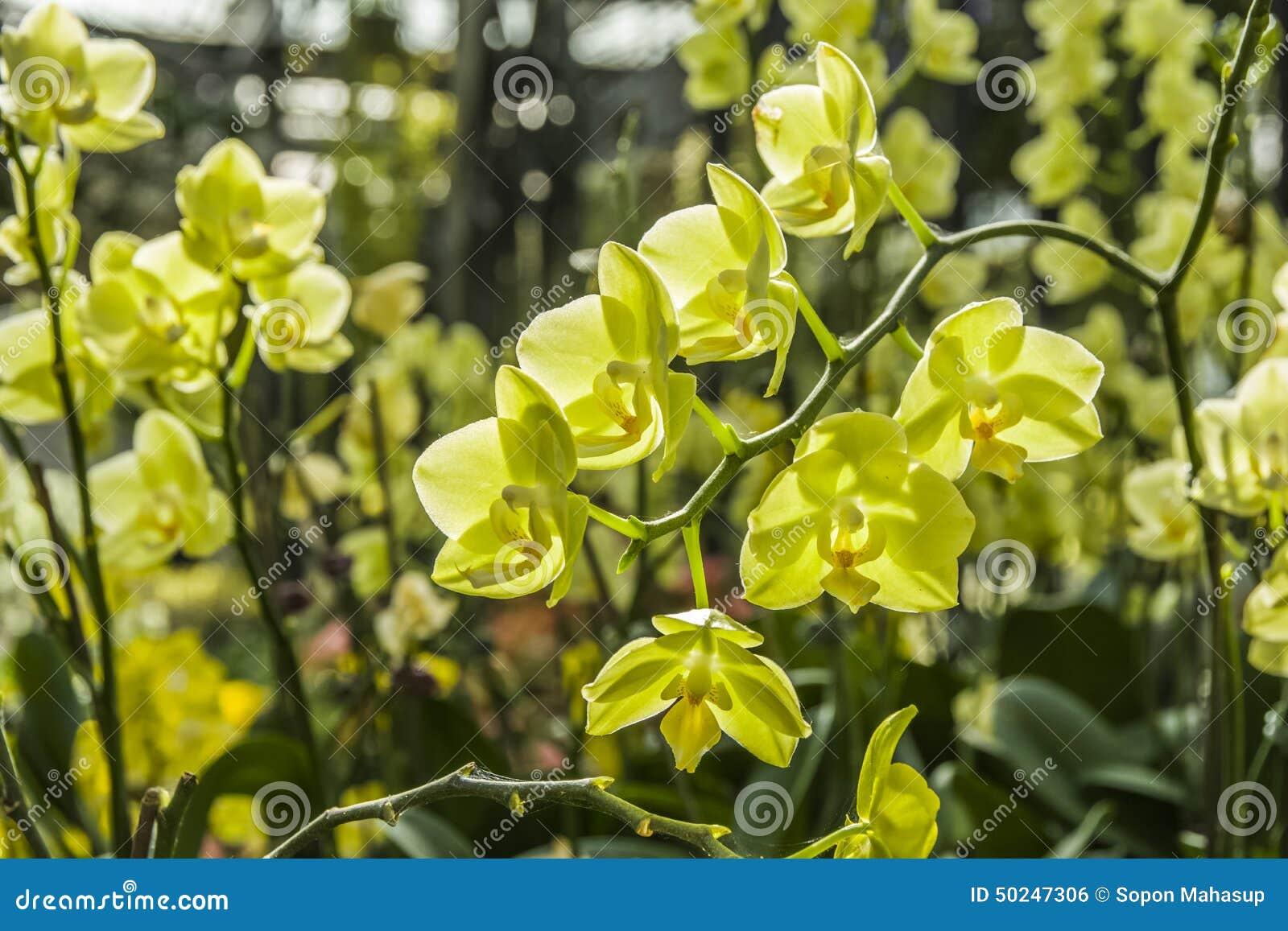 Schöne Orchideen
