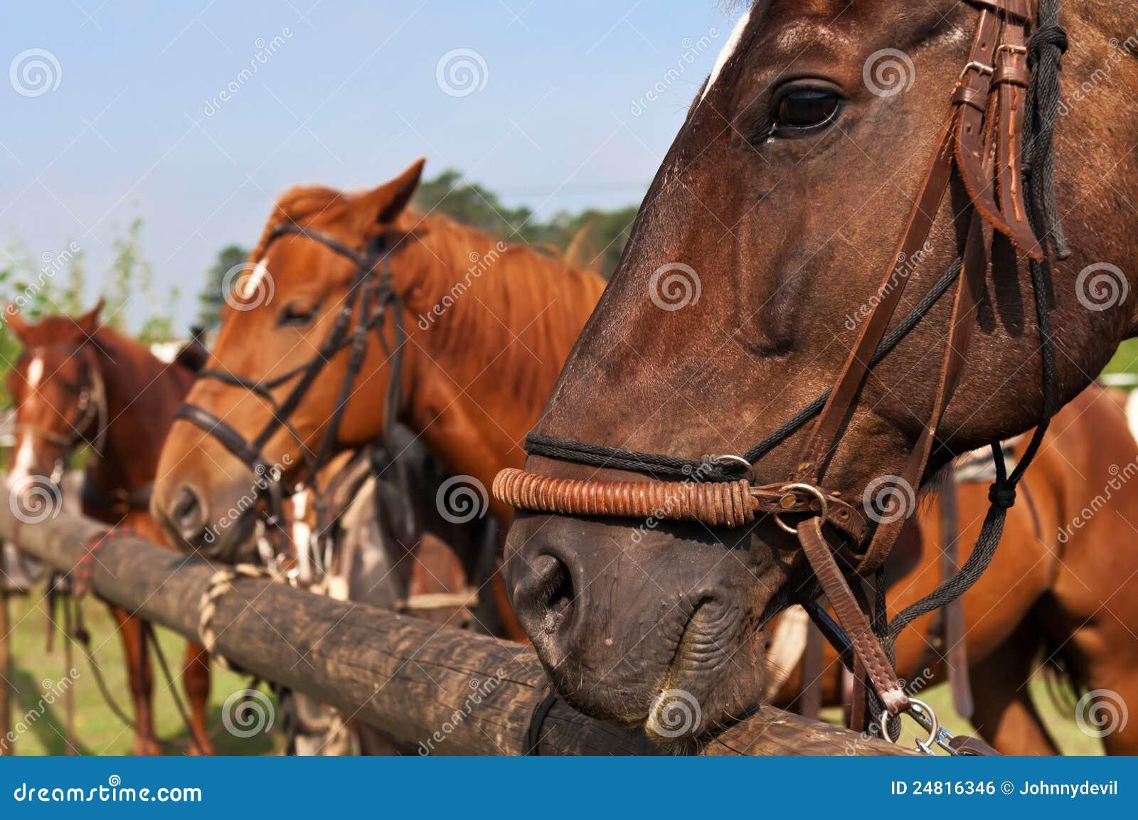 sch ne pferde stockfoto bild von karosserien ausf hrlich 24816346. Black Bedroom Furniture Sets. Home Design Ideas