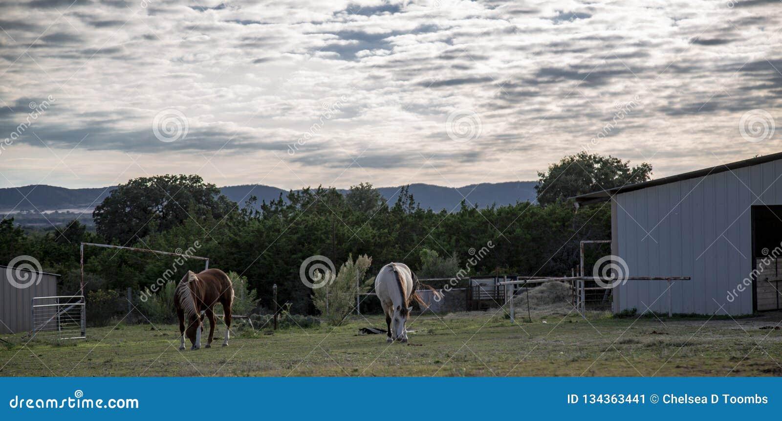 Schöne Pferde Graze Hill Country Pasture