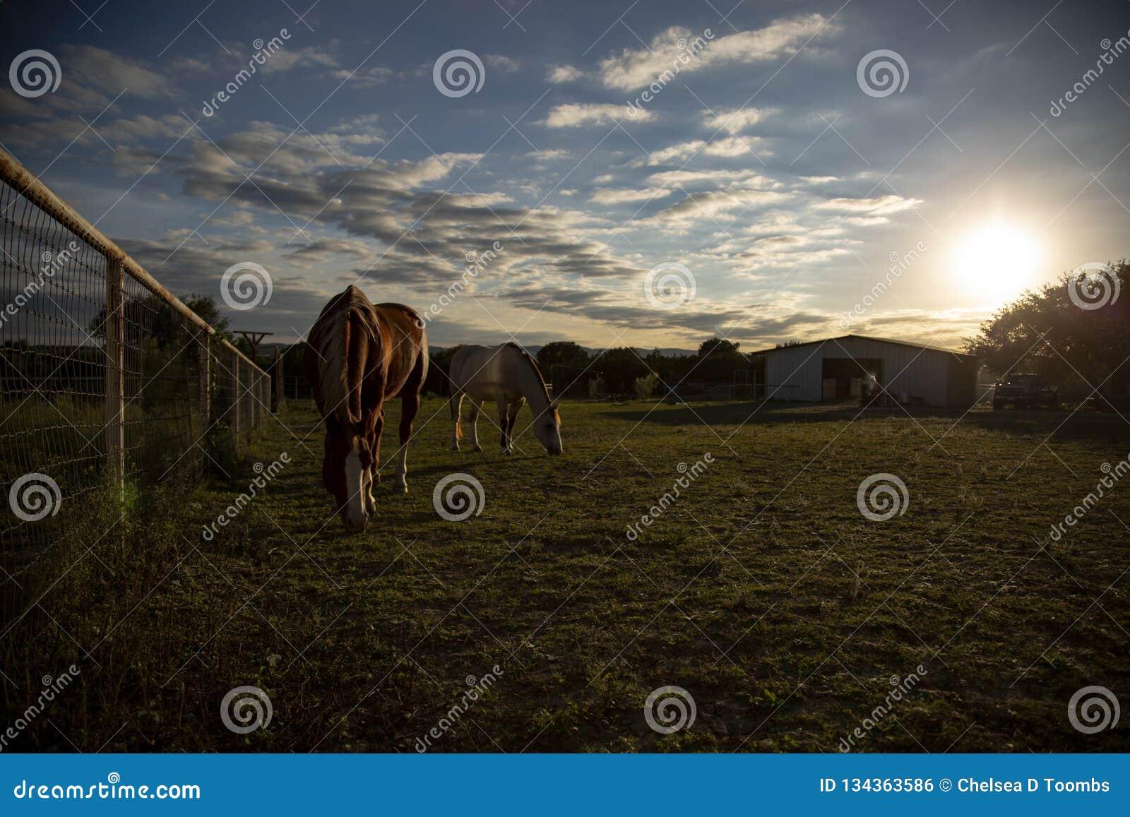 2 schöne Pferde Graze Texas Hill Country