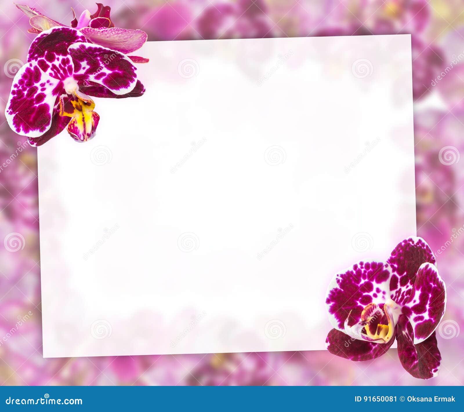 Schöne Rosa Orchideen-Grenze Für Gruß-Karte Oder Reizenden Blumen ...