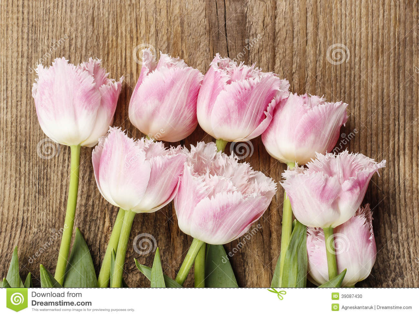 sch ne rosa und wei e tulpen auf holz stockfoto bild von. Black Bedroom Furniture Sets. Home Design Ideas