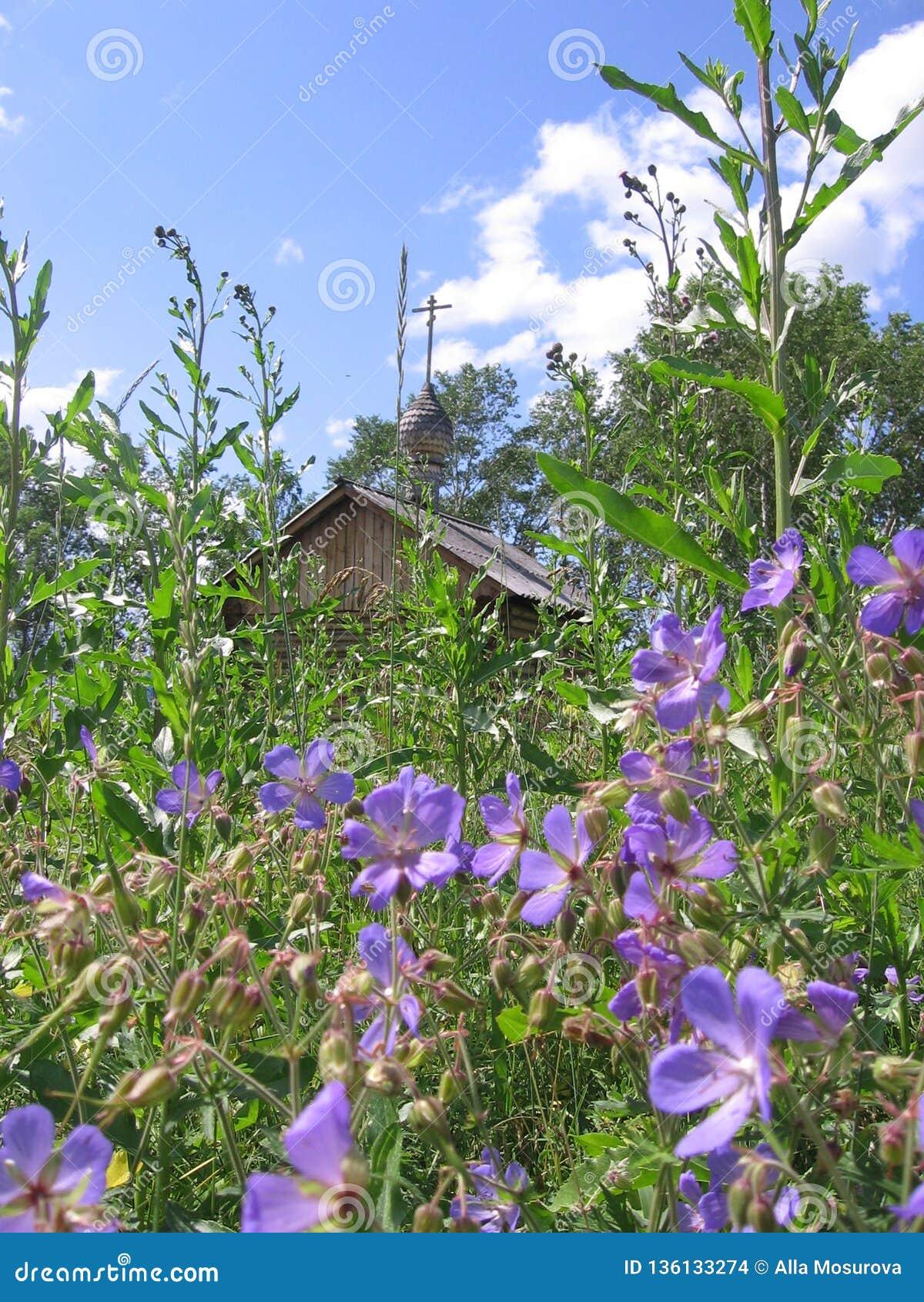 Schöne sibirische Landschaft Russland ist ein Feld von Blumen und von Kirche mit einem Kreuz weit