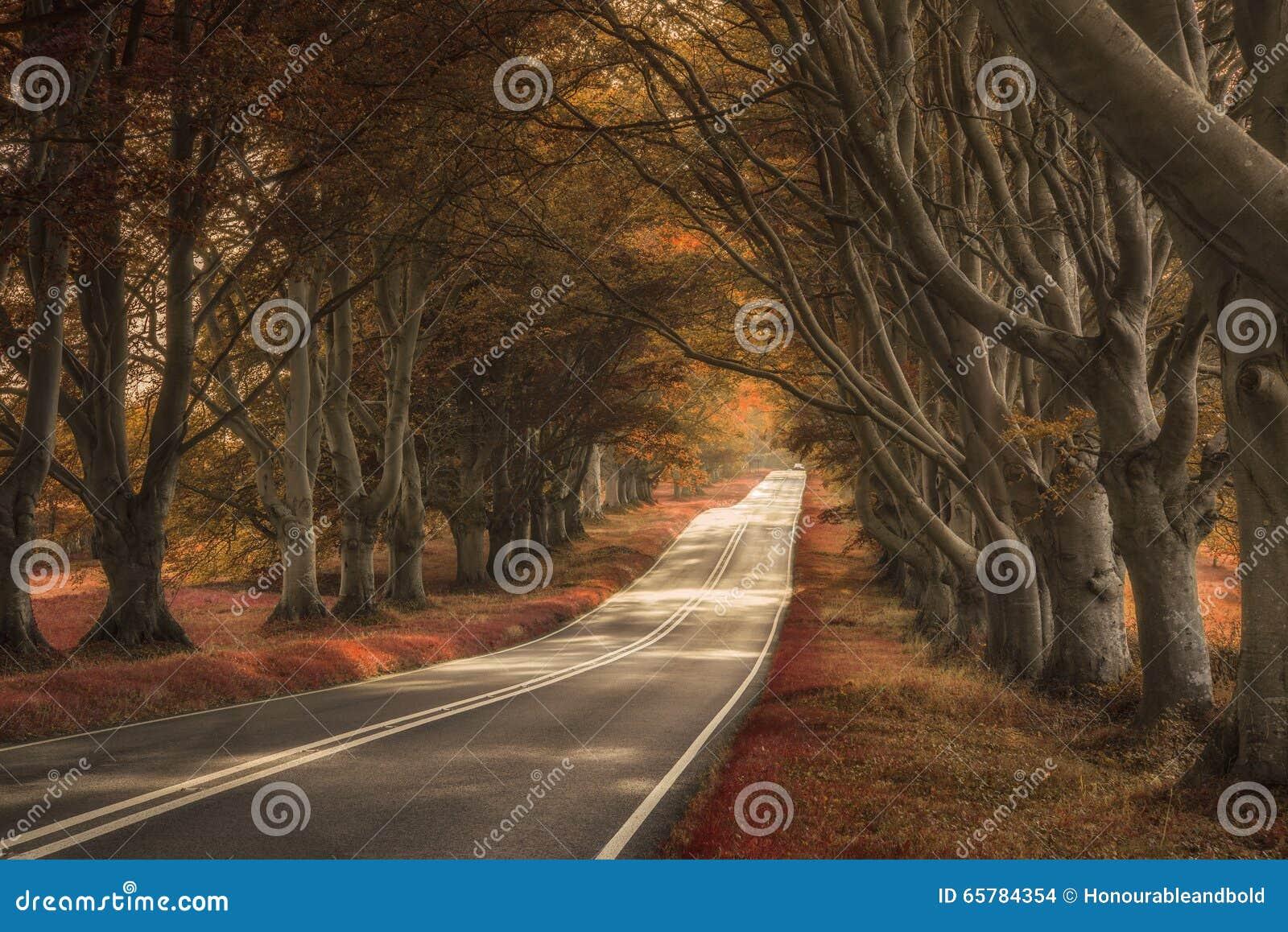Schöne surreale Alternative farbige Waldlandschaft