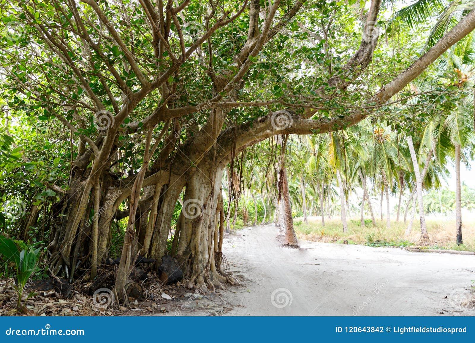 Schöne szenische Ansicht des Weges und der Bäume mit Grün