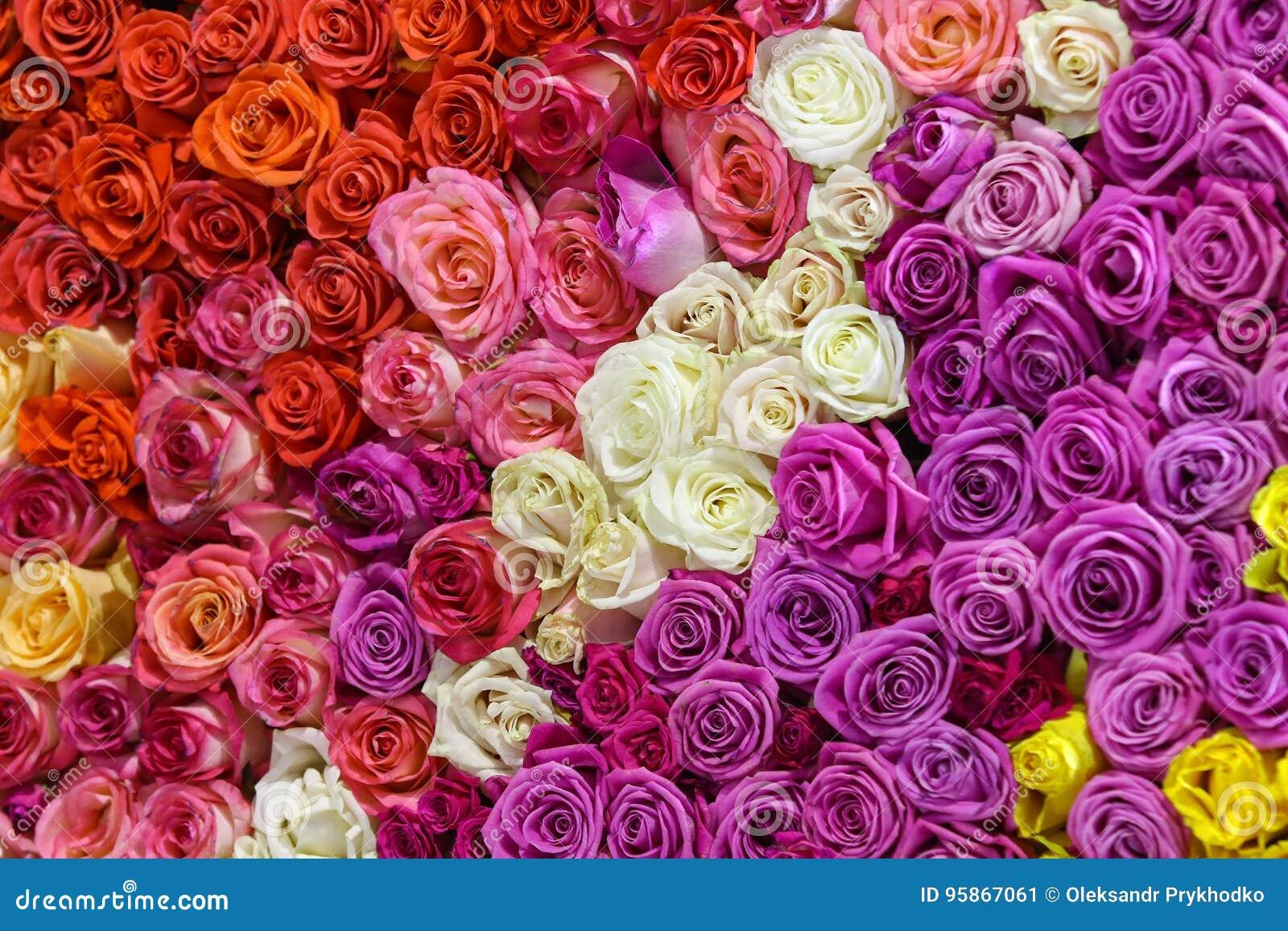 Schöne Wand Hergestellt Von Den Bunten Rosen Stockbild - Bild von ...