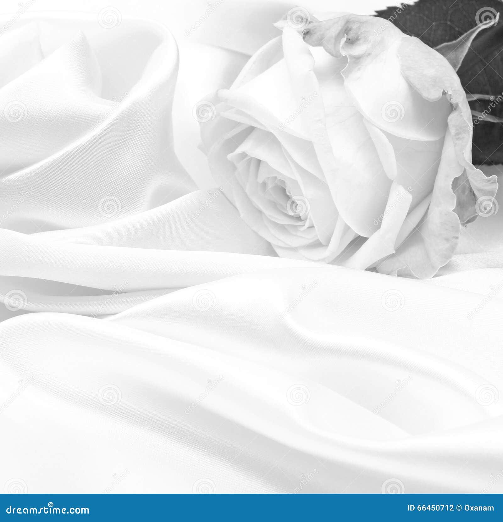 sch ne wei e rosen in schwarzweiss stockfoto bild von knospe ge ffnet 66450712. Black Bedroom Furniture Sets. Home Design Ideas