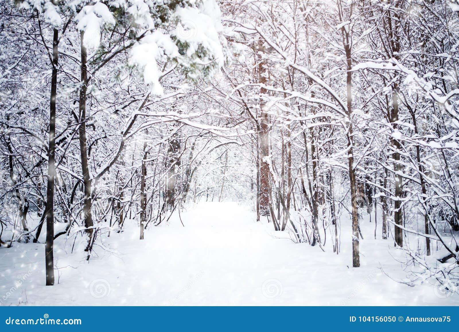 Schone Winterlandschaft Mit Schnee Deckte Baume Ab Gluckliches