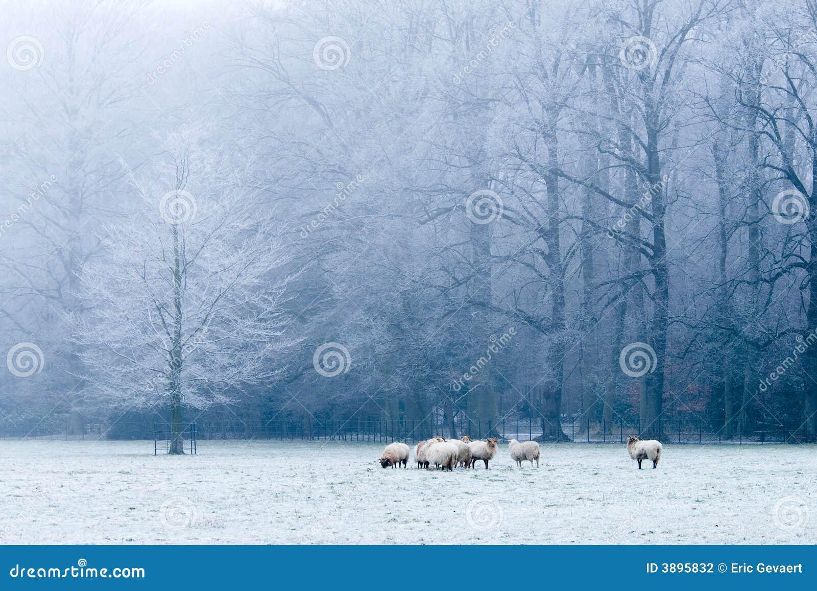 Schöne Winterlandschaftsszene