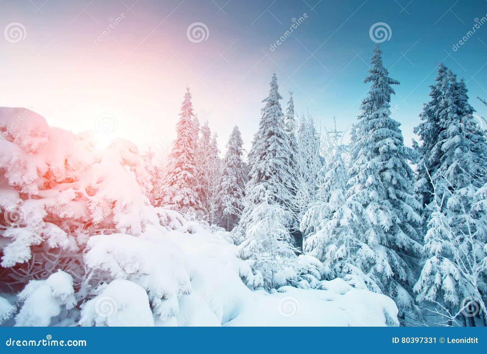 Sch ne winterliche landschaft stockbild bild von berraschen hoar 80397331 - Winterliche bilder kostenlos ...