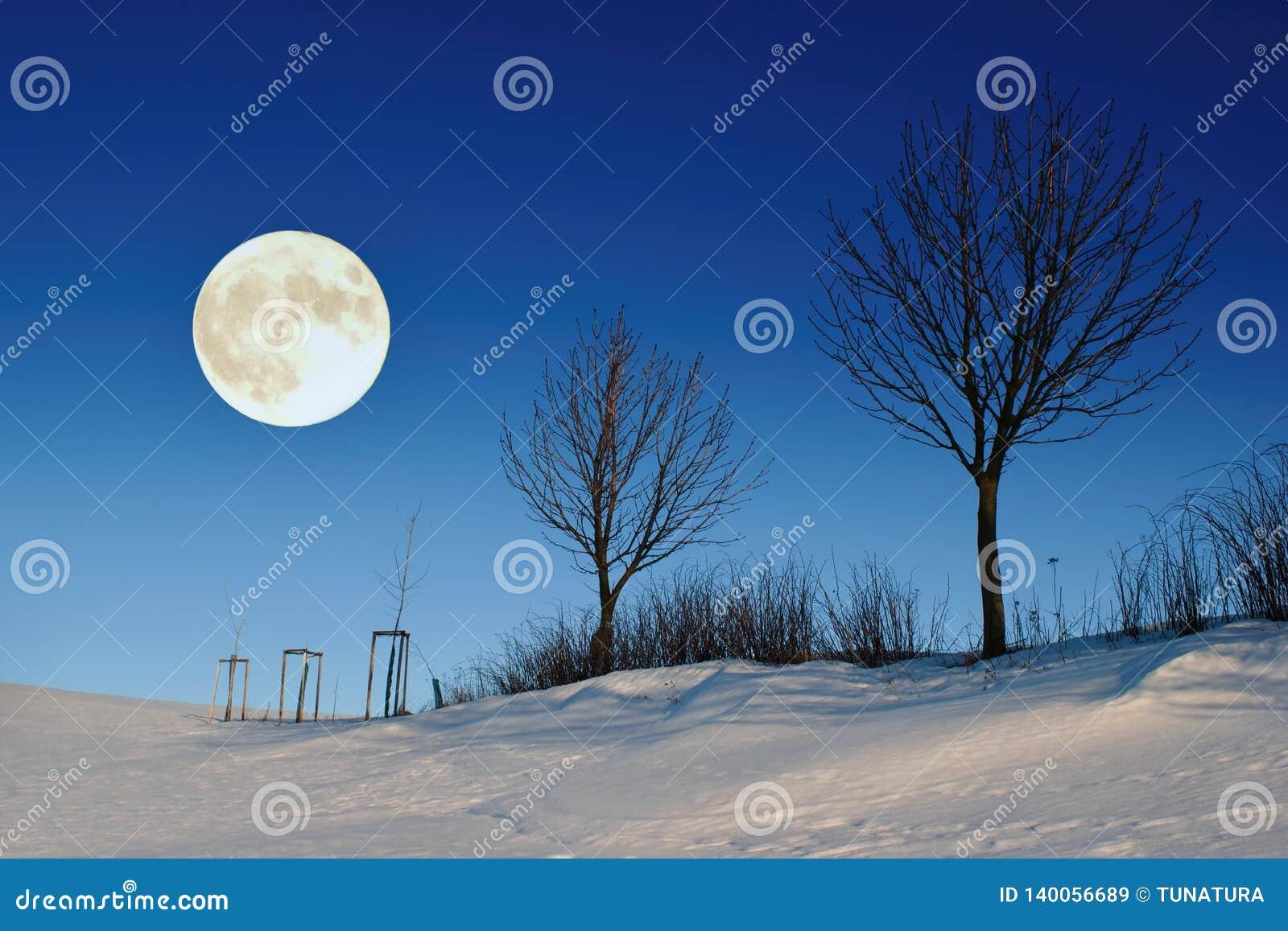 Schöne Winternachtlandschaft mit Baum silhouetes und Vollmond