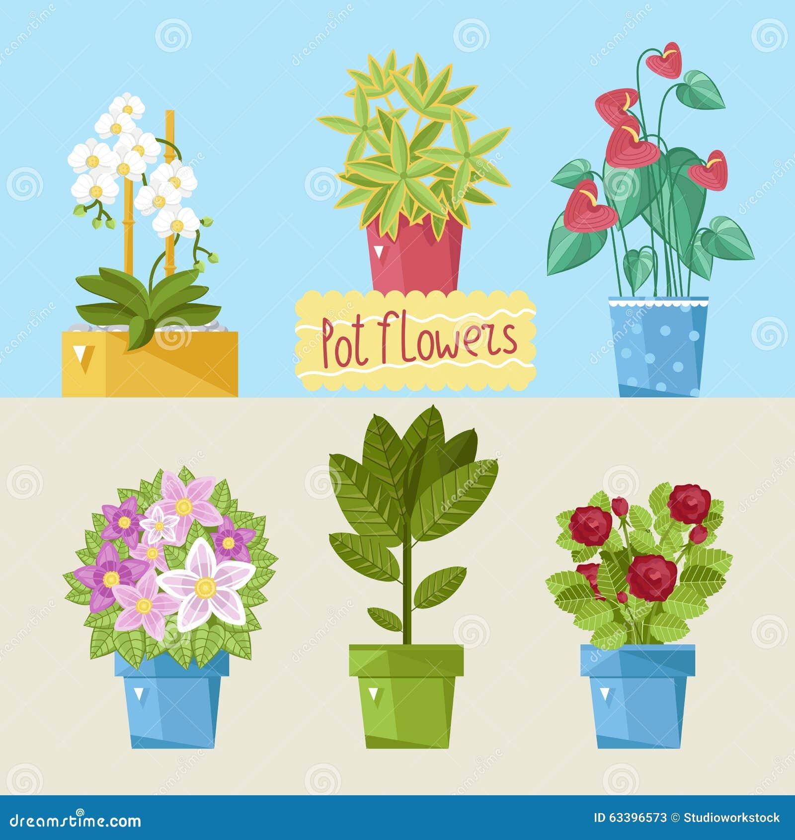 Schöne Zimmerpflanzen Stock Abbildung Illustration Von Gardening