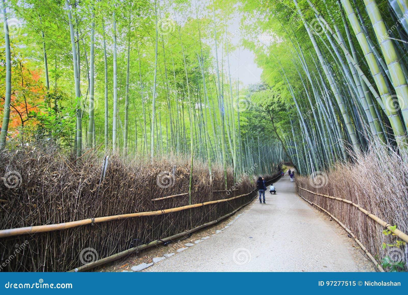 Schoner Bambuswald Arashiyama In Kyoto Japan Redaktionelles Bild