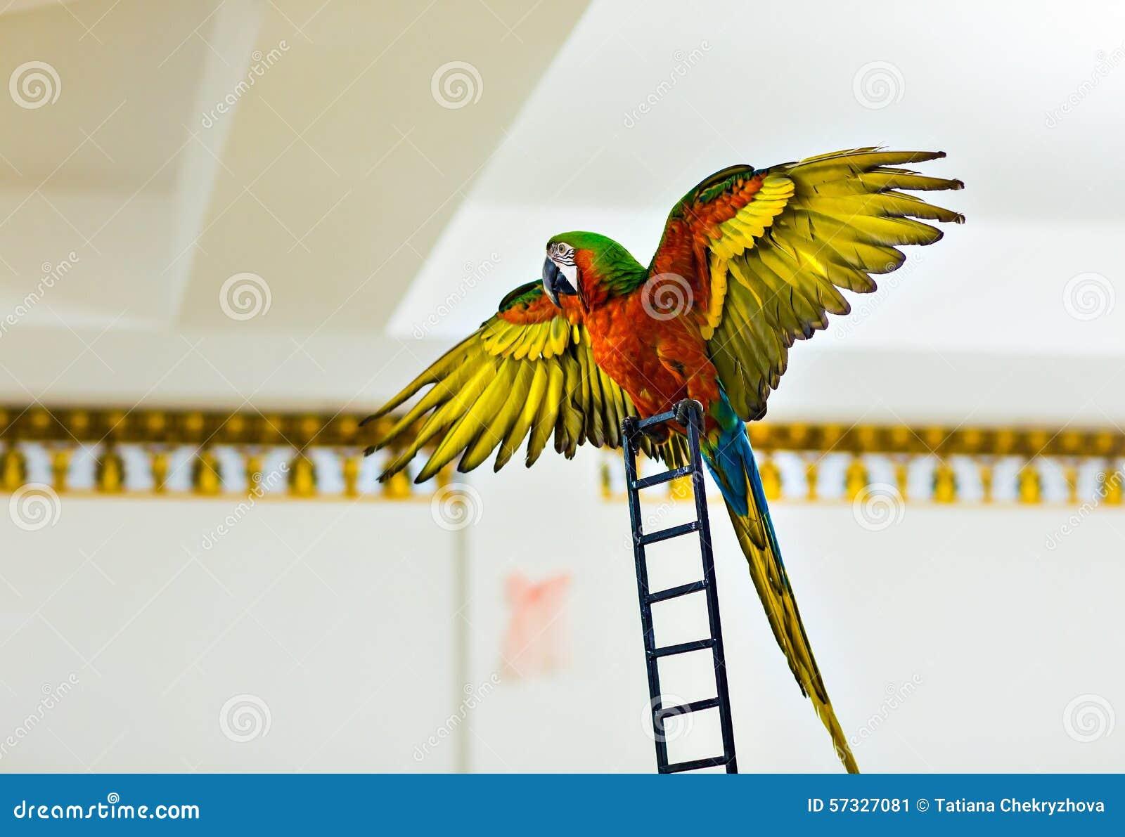 Schöner bunter Papagei