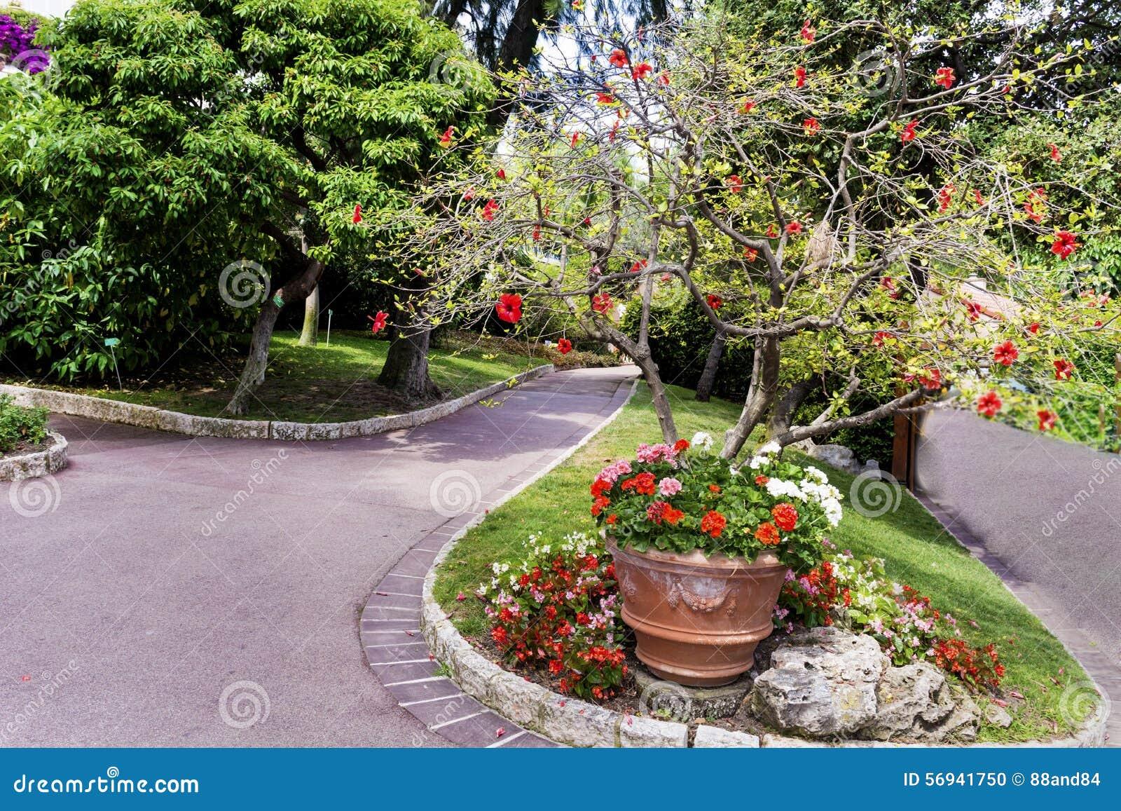 Schöner Exotischer Garten In Monaco Stockfoto Bild Von Anziehungen