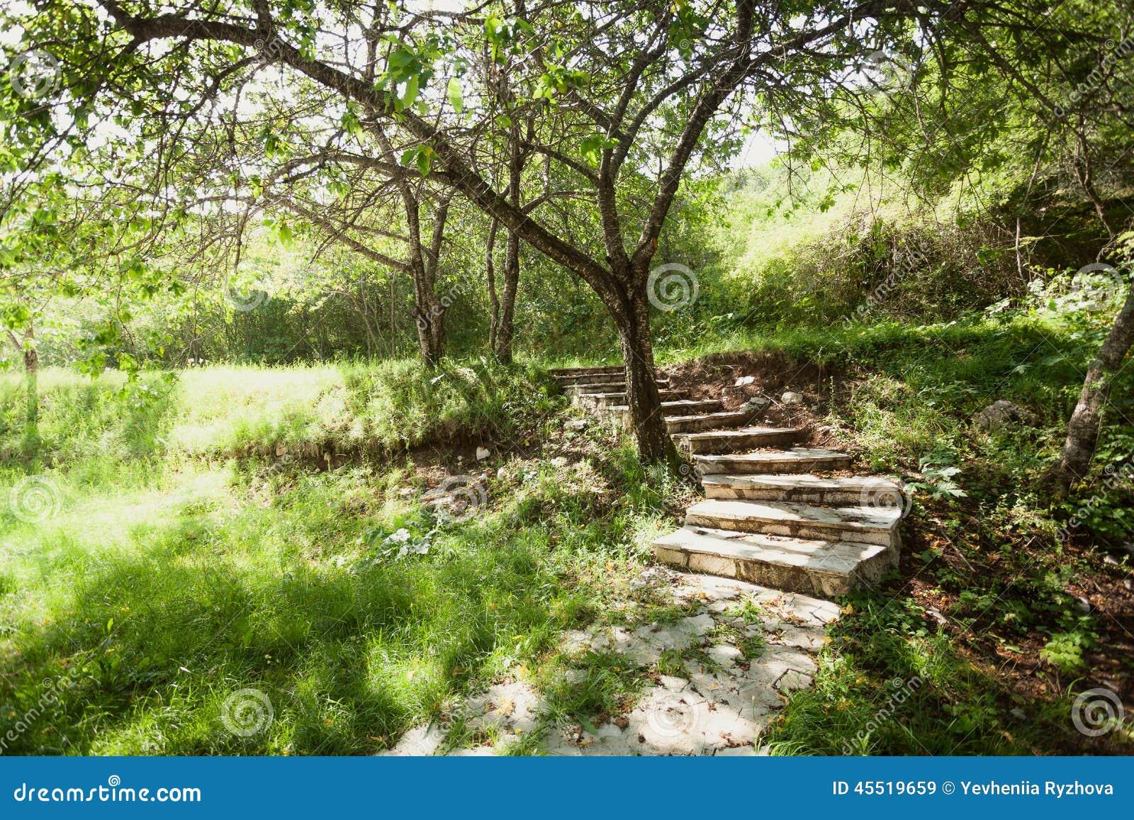 Schöner Garten Mit Bäumen Und Steinweg