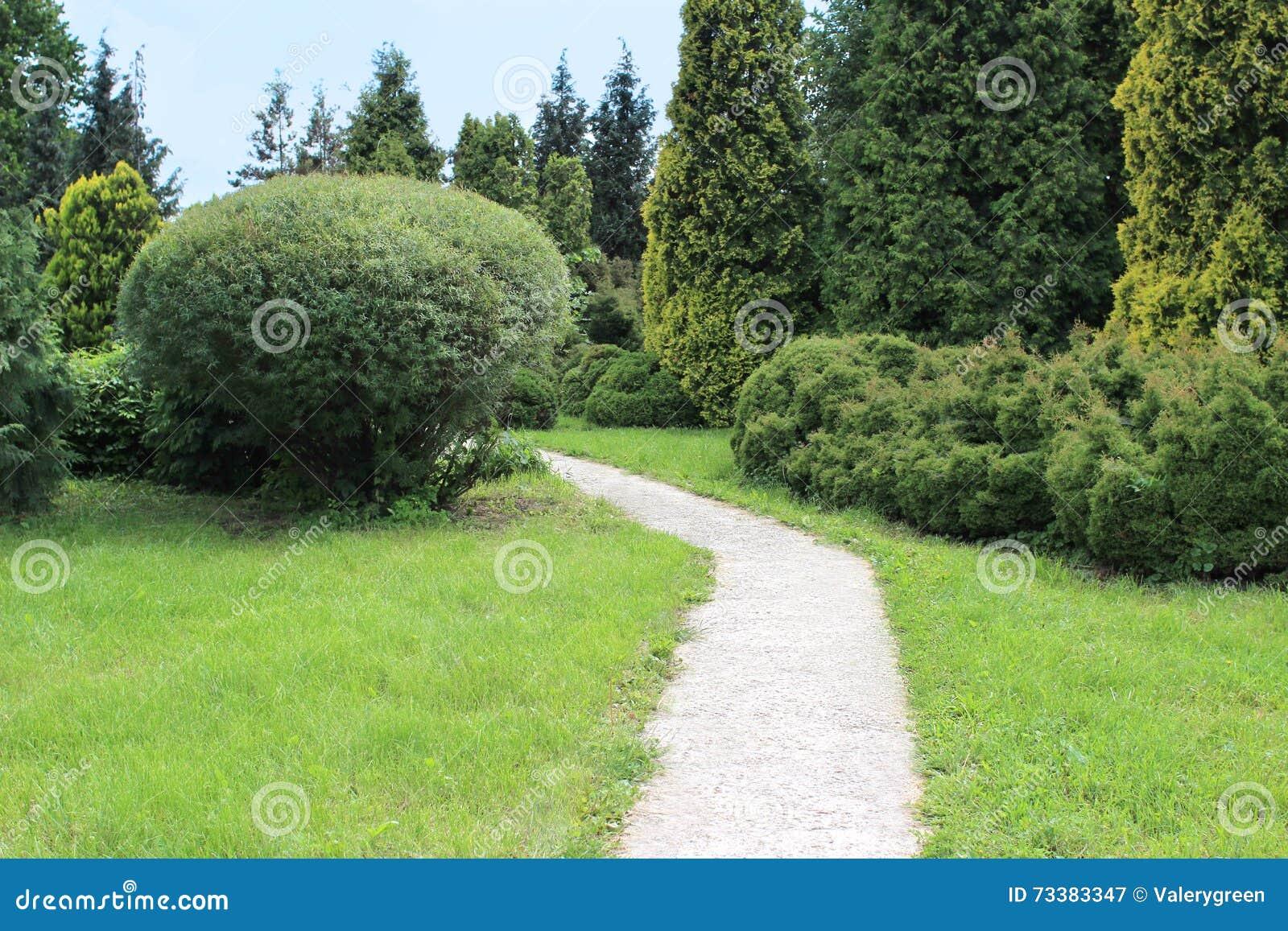 Schöner Garten Mit Rasen Nadelbäumen Und Weide Stockbild Bild Von