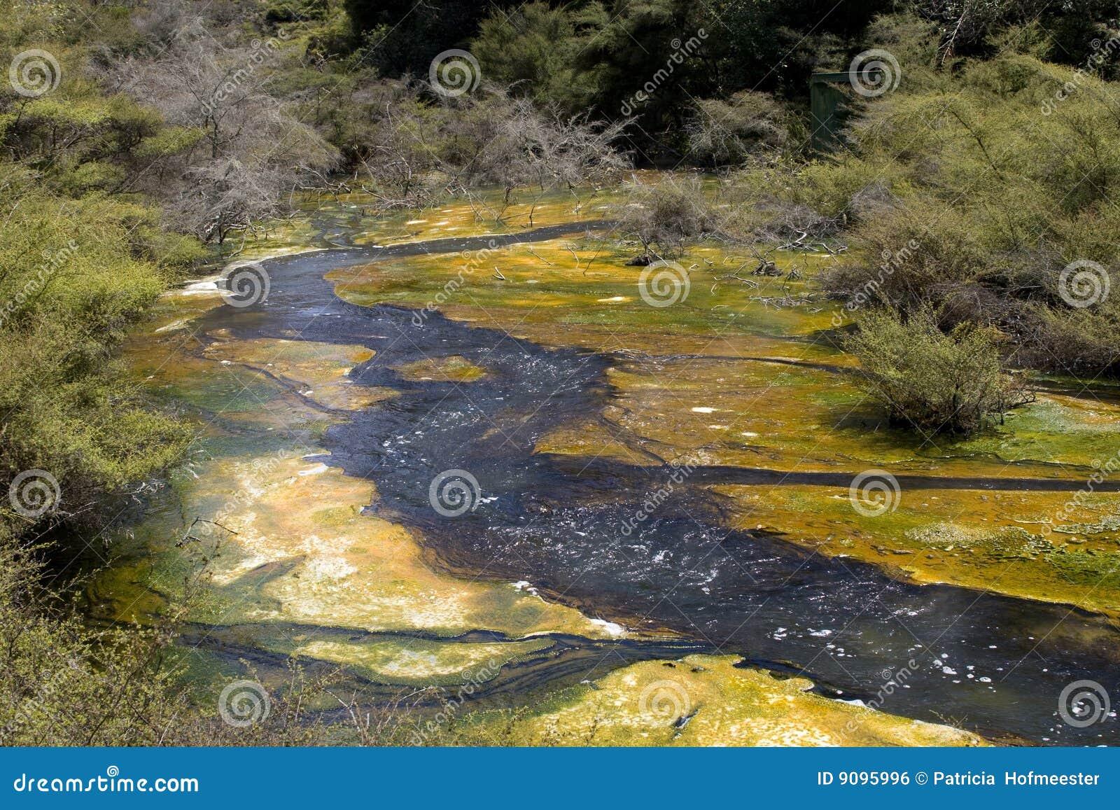Schöner gelber und grüner Bereich in Neuseeland