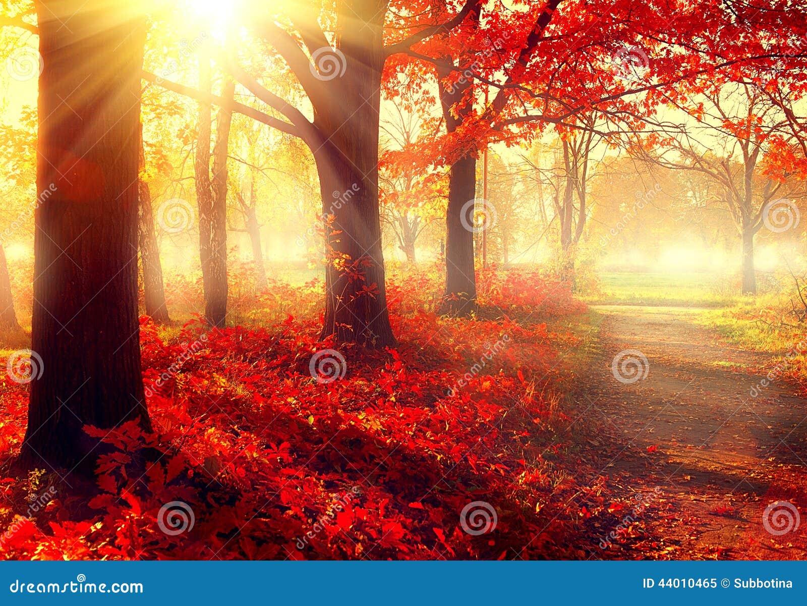 Schöner herbstlicher Park im Sonnenlicht