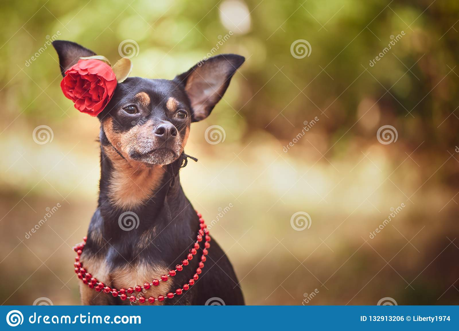Schöner Hund, ein Welpe in a in einem Blumenkranz, der auf einer Rückseite sitzt