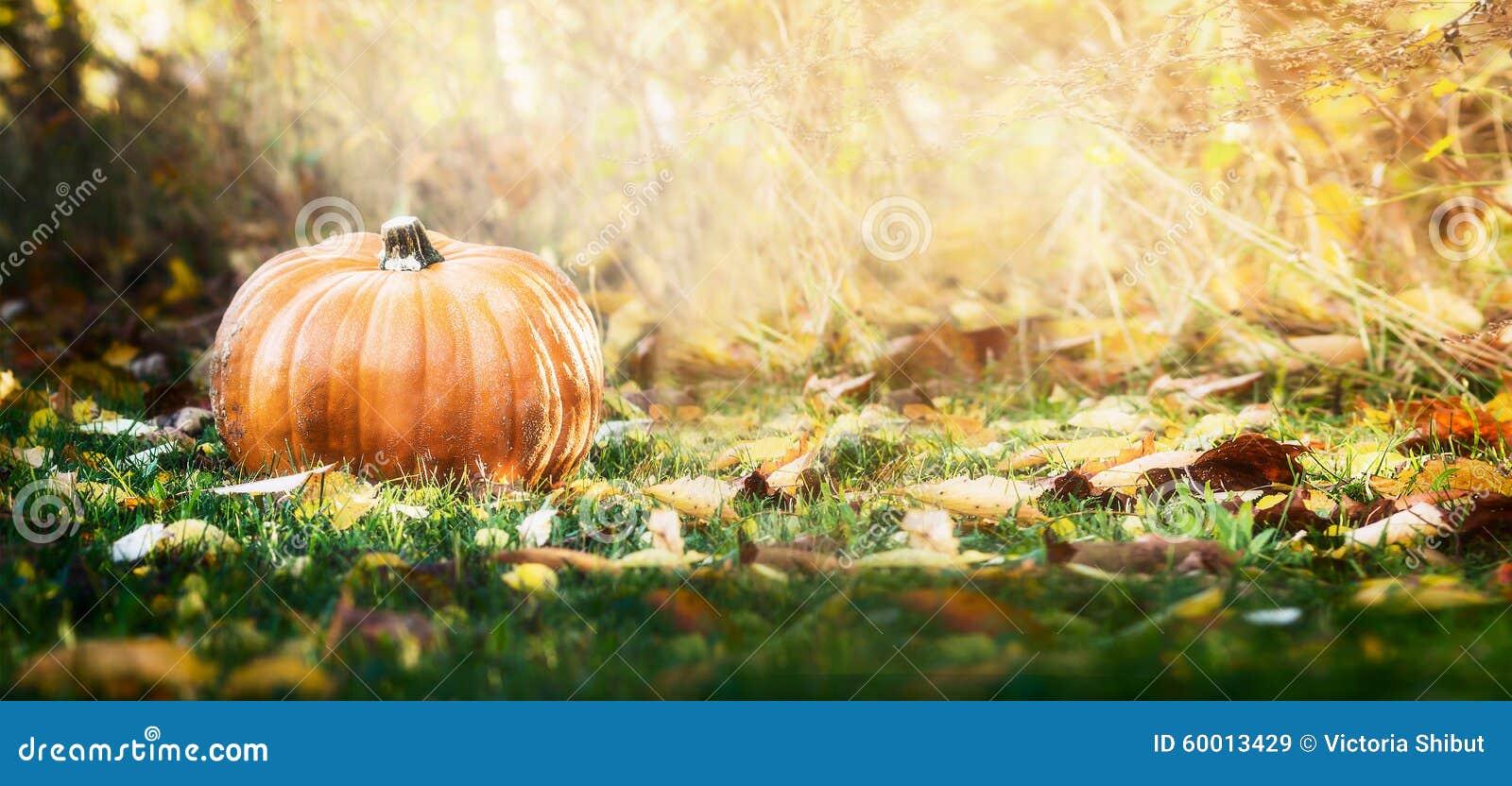 Schöner Kürbis über Falllandschaft mit Rasen, Bäumen und Laub Herbst, der Naturkonzept erntet
