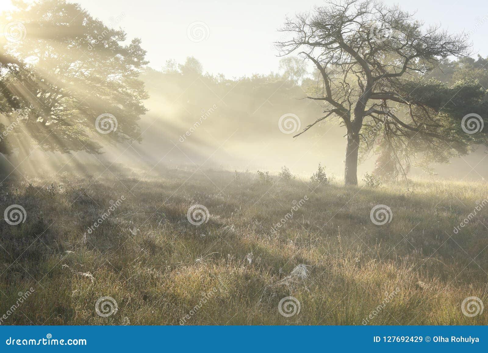 Schöner nebelhafter Sonnenaufgang auf Waldwiese