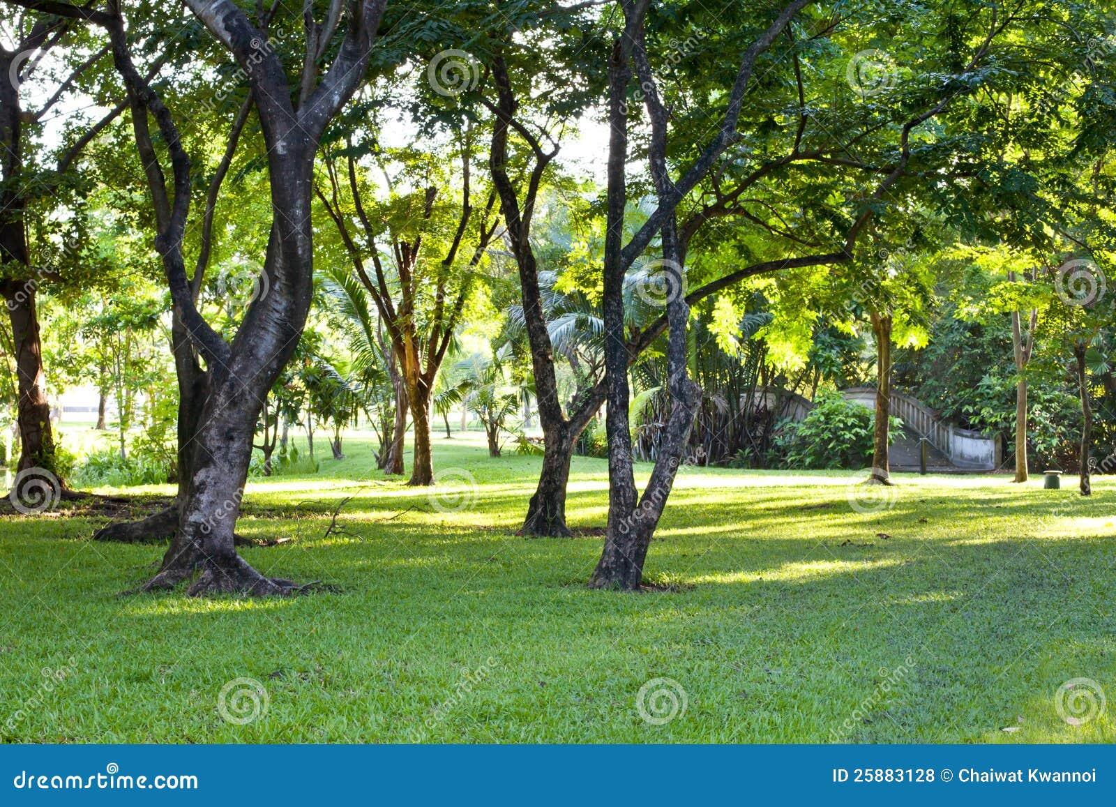 Park Als Tuin : Schöner parkgarten stockfoto. bild von pfad mittag blume 25883128