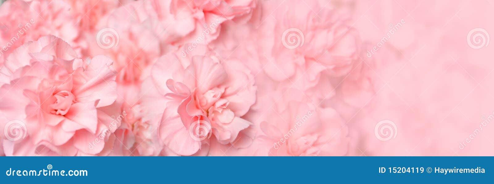 Schöner rosafarbener Gartennelke-Blumen-Vorsatz