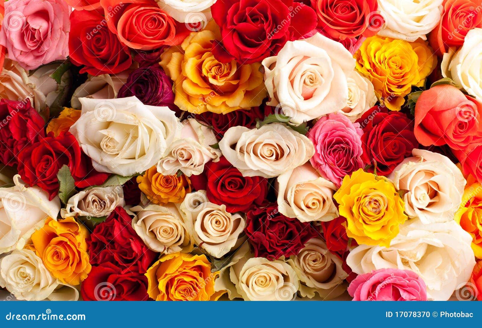 Schöner Rosehintergrund