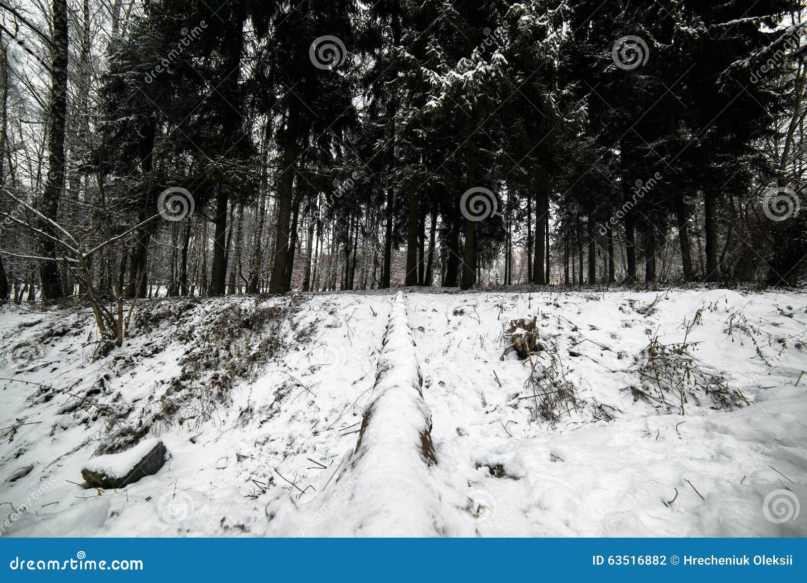 Schöner ruhiger Roan auf einer Plattform Frost, dunkelblauer Himmel karpaten eingebürgert
