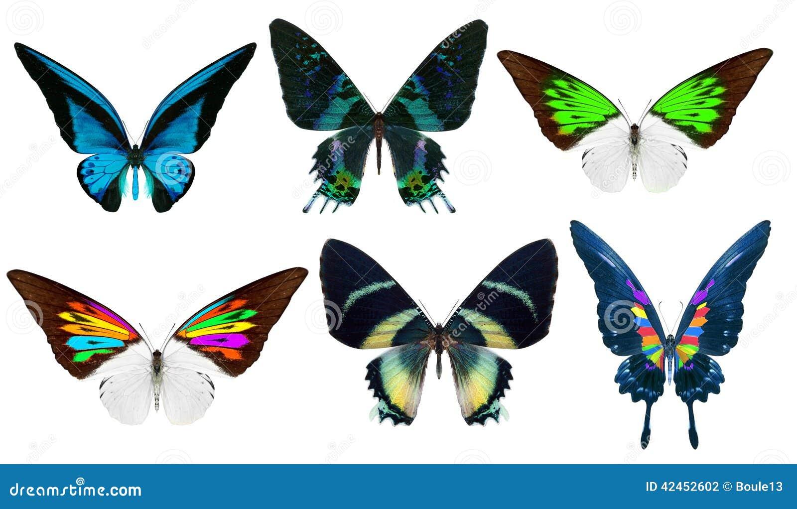 Schöner Schmetterling lokalisiert auf Weiß