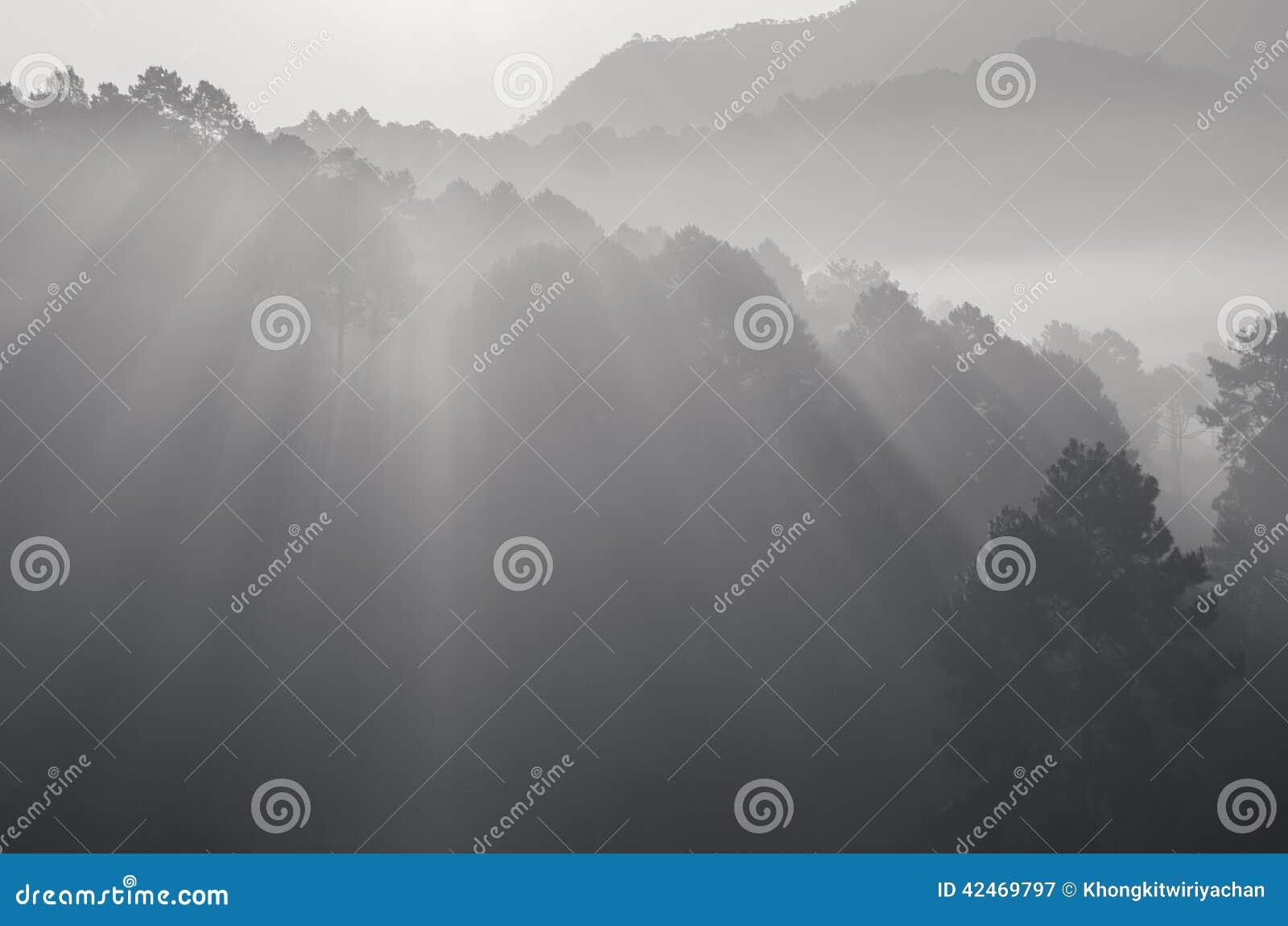 Schöner Schwarzweiss-Strahl des Lichtes