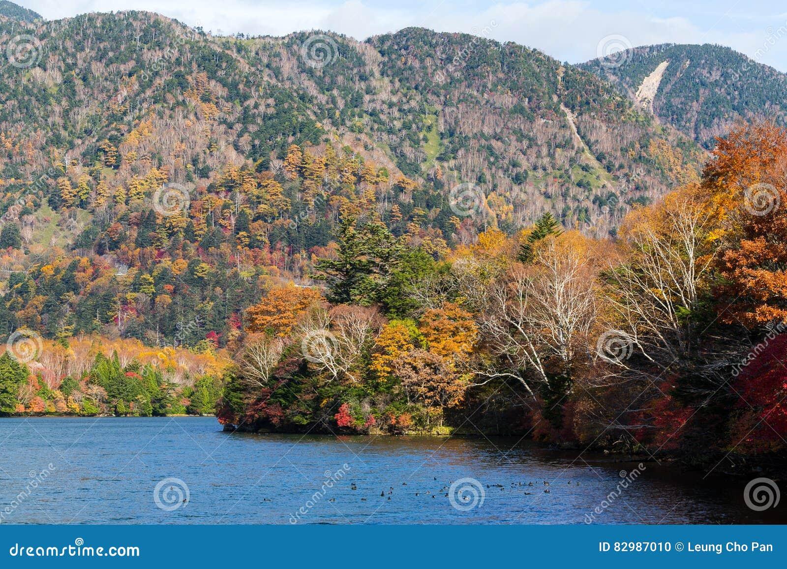 Schöner See im Herbst