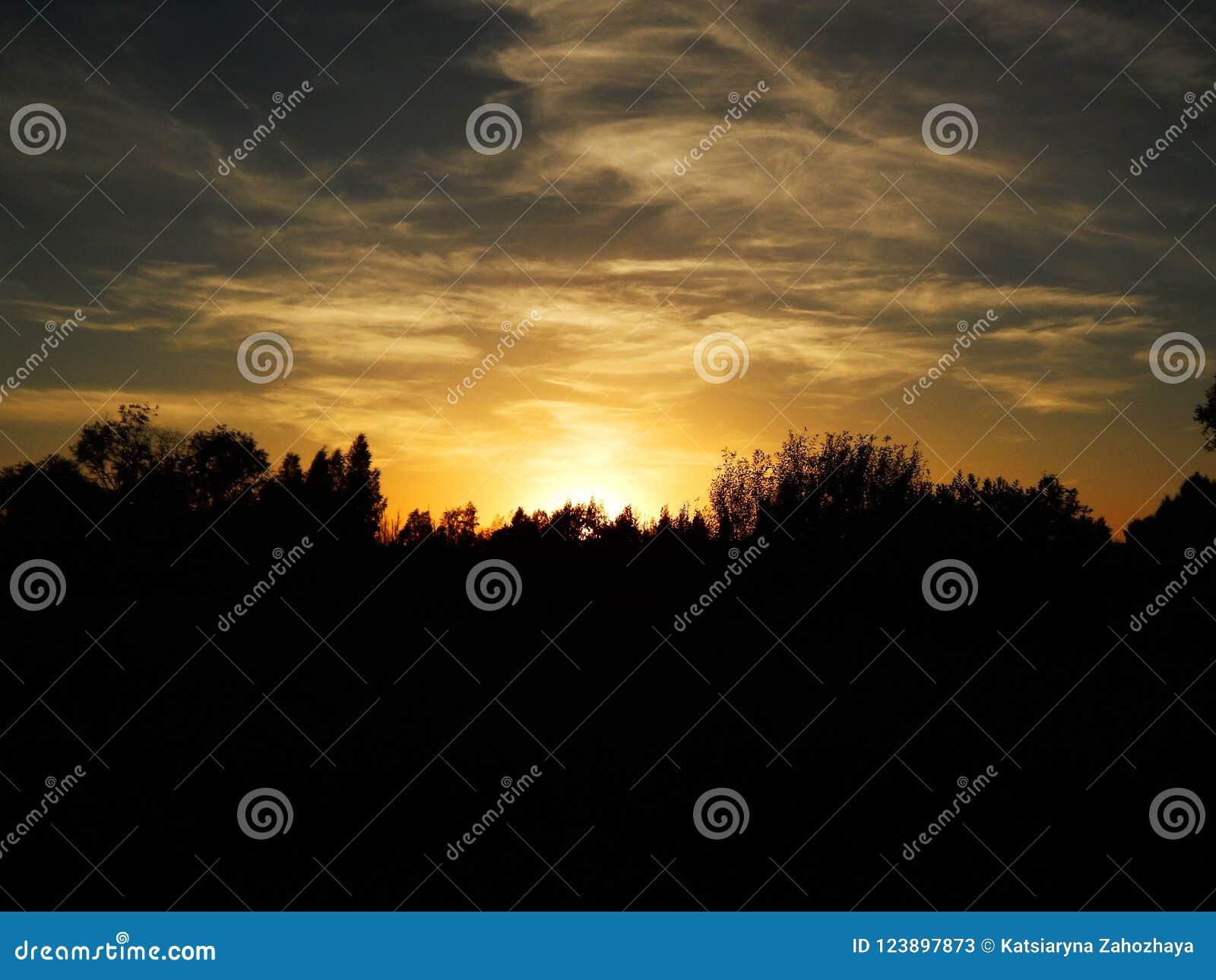 Schöner Sonnenuntergang mit blauem Himmel und Bäumen