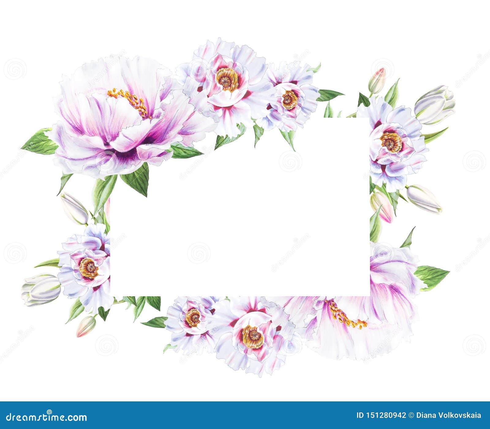 Schöner weißer Pfingstrosen- und Tulpenrahmen Blumenstrau? von Blumen Blumendruck Markierungszeichnung