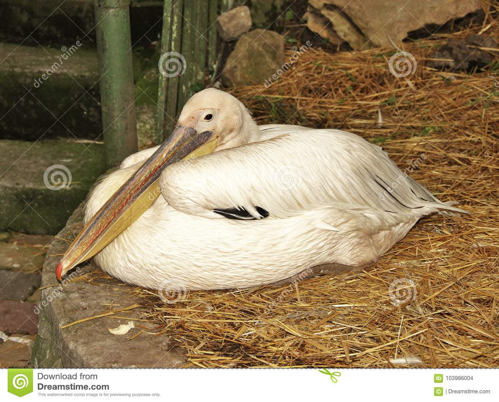 schöner weißer vogel wichtig ruhig ruhe untersuchend den abstand