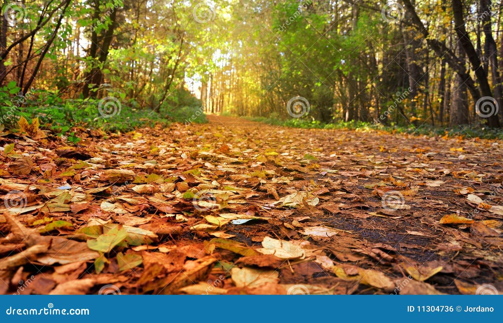 Schöner Zweig eines Herbstes